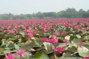 Wang-Buadaeng-Nongkhai-Thailand-03.jpg