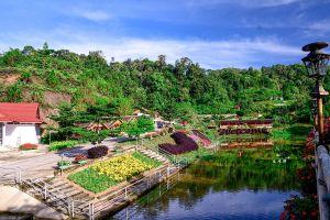 Winter-Flowers-Garden-Yala-Thailand-05.jpg